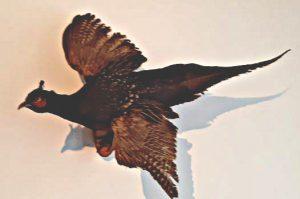 Kulturvogel Gernot Fischer Kondratovitch